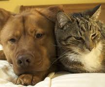 dog and divorce